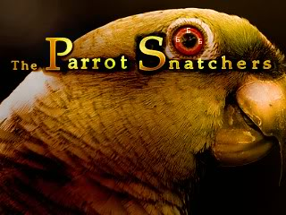 Zoomed screenshot of The Parrot Snatchers