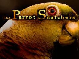 Screenshot 1 of The Parrot Snatchers