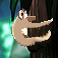 Screenshot 3 of A Sloth for Both Seasons width=